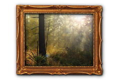 Image of foggy forest Royalty Free Stock Image