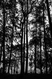 Image of forest silhouette. Against the sunset Stock Images