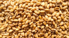 Image fraîche de plan rapproché de graines de blé photographie stock libre de droits