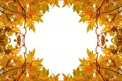 The frame for autumn portraits , abstract frame autumn yellow sharp leaves royalty free stock image