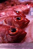 A Seafood Stall in the Market displaying red fish. An image of fresh catch of the day laid out on ice Royalty Free Stock Photos