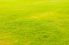 Image of fresh spring green grass Royalty Free Stock Photo