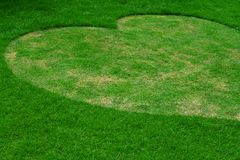 Image of fresh spring green grass, Heart shape. Royalty Free Stock Photo
