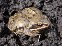 Image of frog Stock Images