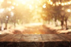 Image of front rustic wood boards and background forest. royalty free stock photography