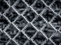 Image of frozen barbed wire in the winter royalty free stock photo