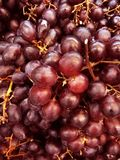 Red ripen grapes beautiful fruit image royalty free stock photos