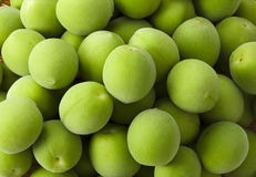 An image of Fruit of plum Royalty Free Stock Images