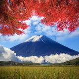 Image of fuji mountain Royalty Free Stock Photography