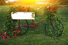 Image of garden bike decorated with red flowers in garden on summer stock photography