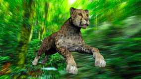 The image of a gepard Royalty Free Stock Photo