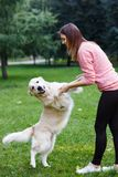 Image of girl holding dog by front paws on green lawn stock photos