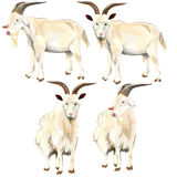 Image of goat. Royalty Free Stock Photo