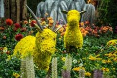 Flower goat stock images