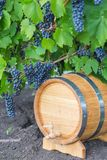 Image of grapes on a barrel Royalty Free Stock Photography
