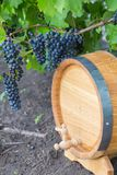 Image of grapes on a barrel Stock Photos