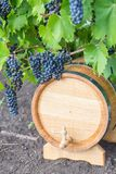 Image of grapes on a barrel Royalty Free Stock Image