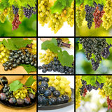 Image of grapes and bottles with wine closeup Stock Photos