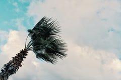 Image graphique minimale de concept de palmier en vents violents devant des nuages de tempête photos stock
