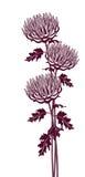 Image graphique verticale des chrysanthèmes illustration stock