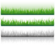 Image of a grass. Some variants of an illustration with the image of a grass Stock Photos