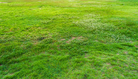 image of grass field on morning time. Stock Image
