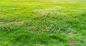 image of grass field on morning time. Stock Images