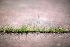 Grass Through Concrete Sidewalk 02. Image of grass growing through a crack in a concrete sidewalk. Very nice depth of field (DOF Stock Photography