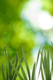 Image of grass near the water against the sun Royalty Free Stock Photography