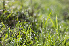 An image of grass Stock Images