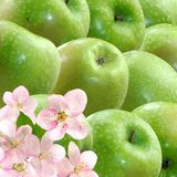 Image of green apples Royalty Free Stock Photos
