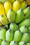 Green bananas Royalty Free Stock Photography