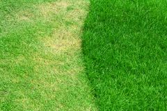 Image of green grass Royalty Free Stock Image