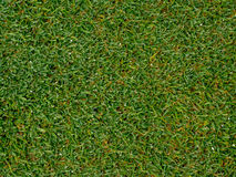 The image of Green grass field background, texture, pattern Stock Images