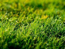 The image of Green grass field background, texture, pattern Royalty Free Stock Images