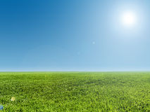 Image of green grass field and blue sky Royalty Free Stock Photo