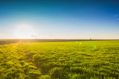 Image of green grass field and blue sky Royalty Free Stock Photos