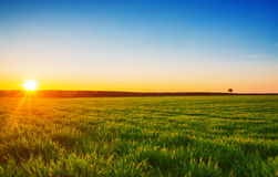 Image of green grass field and bright blue sky Stock Image
