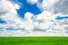 Image of green grass field and bright blue sky. Green fields under blue sky. Ukraine Stock Photos
