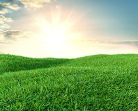 Image of green grass field and bright blue sky. 3d illustration Royalty Free Stock Image