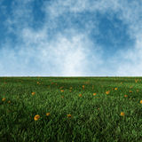 Image of green grass field with dandelions and sky Royalty Free Stock Image