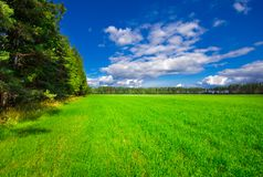 Image of green grass field, green forest and bright blue sky with clouds on sunny summer day.  Royalty Free Stock Image