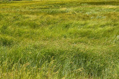 Image of green grass field Stock Photos