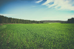 Image green grass field and trees in forest. image is retro toned Royalty Free Stock Photography