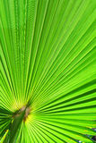 Image of green palm leaf Stock Images