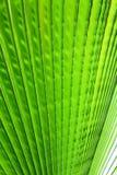 Image of green palm leaf closeup Stock Photo
