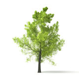 Green tree Royalty Free Stock Photo