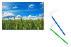 Image of green wheat field with blue sky on paper Royalty Free Stock Image