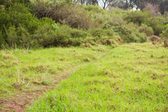 Image of a greenness hiking path Stock Image