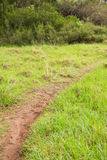 Image of a greenness hiking path. Image of a beautiful greenness hiking path Stock Photo